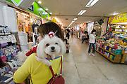 Pet dog in underground shopping arcade.