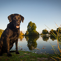 Dogs at Petworth Park