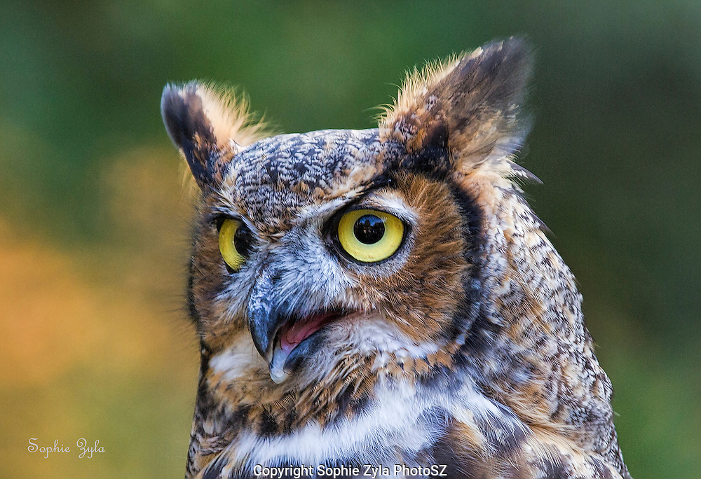 I'm cute and want my own show<br />