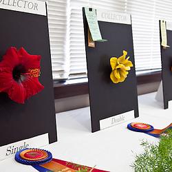 Hibiscus Show & Plant Sale