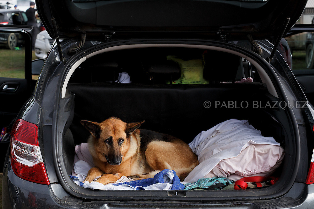 04/12/2016. A dog lays on the back of a car during the Spanish National Mushing Contest on December 4, 2016 in Olvega, in Soria province, Spain. Around 300 competitors and a thousand dogs attended to the competition. (© Pablo Blazquez)