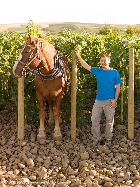 Vineyard portrait & horse