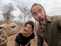 """Dave Matthews (@davematthewsband) takes a selfie with """"Shorty"""" the reticulated orphaned giraffe and Ami Vitale, oblivious, gets a kiss from him instead at @sararacamp. The tallest living land animal, a giraffe stands between 4.5 and 5 meters tall – and almost half that height is neck.<br /> <br />  You can support this incredible place and the people who protect wildlife. Make a $10 contribution in support of Reteti for a chance to win a trip to Kenya, see Dave Matthews in concert and take home Dave's guitar with @prizeo (Link in profile). Not only will you be helping care for orphaned baby elephants and strengthening community ties, you'll also have a chance to win a life-changing trip to see the sanctuary in person. The first $10,000 in funds raised will be generously matched by Elephant Gems (@elephantgems). <br /> <br /> Reteti operates in partnership with Conservation International (@conservationorg) who provide critical operational support and work to scale the Reteti community-centered model to create lasting impacts worldwide. <br /> <br /> Photo by @davematthewsband."""