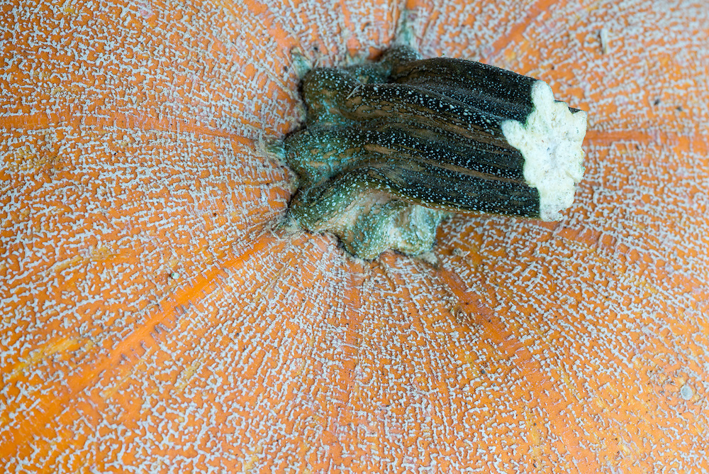 Pumpkin detail.