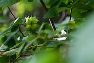 Kasvit - Flora - Finland