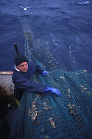 The Wilsons grew up just outside of Eyemouth, in the town of St. Abbs.  Without very many options growing up, fishing was an obvious choice.  Now, even though the brothers are aging and work is becoming harder, they don't know anything else—fishing is their life.
