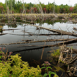 A beaver pond in the Reed Plantation in Reed, Maine.