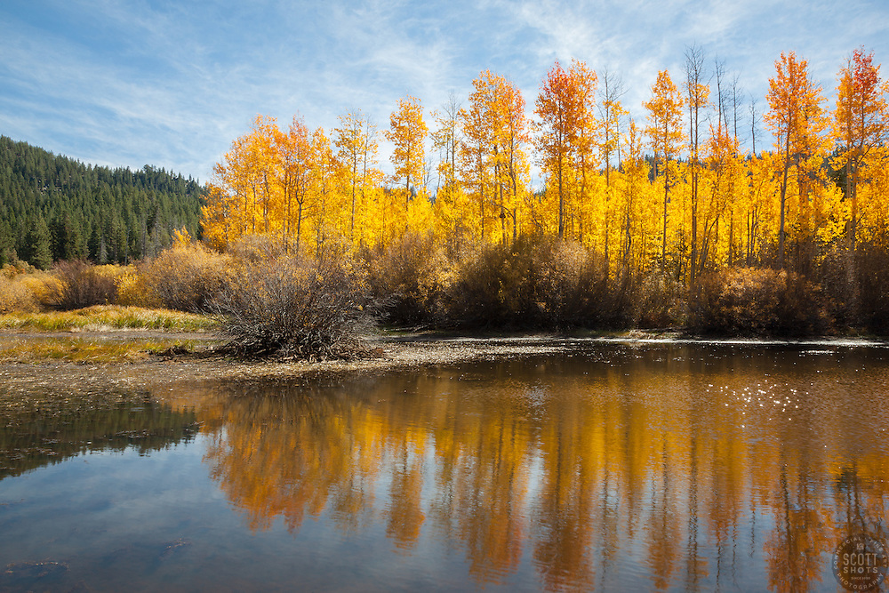 """Aspen Reflections 5"" - Photograph of yellow aspen trees in the fall at a pond near Spooner Lake, Nevada."