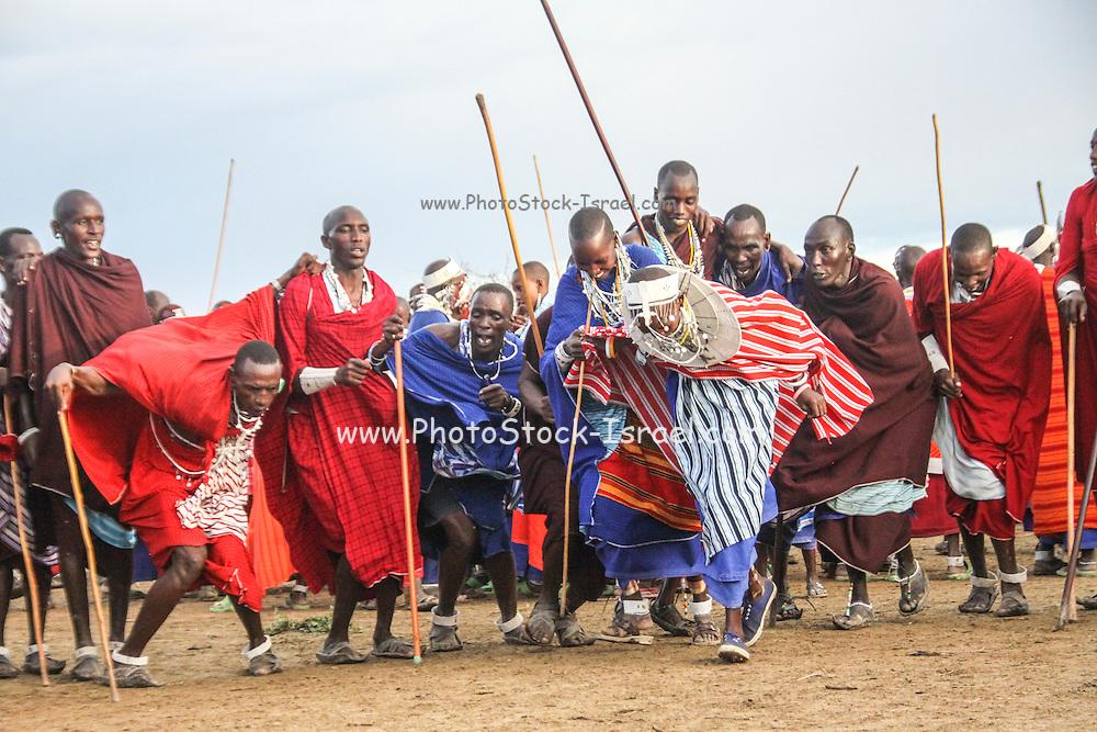 Coronation of a new Maasai chief at a meeting of the elders (ilpayiani). Sinya, Tanzania