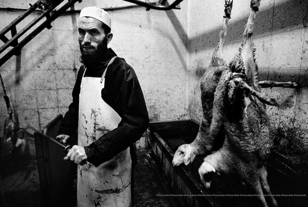 The presence of a considerable number of people from other cultures creates a market of new consumers and jobs. The imam El Anrami carries out animal sacrifices as prescribed in the Koran. Escorxador del Gironès. Spain.
