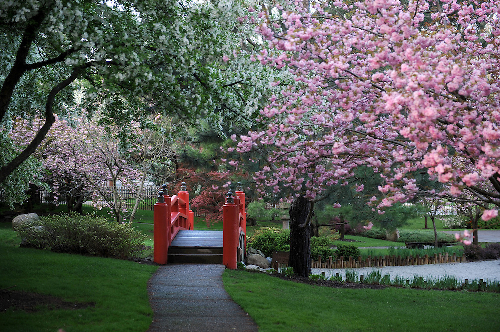 Shiojiri Garden in Mishawaka...Photo by Matt Cashore..Use of this image prohibited without authorization and/or compensation..To contact Matt Cashore:.574.220.7288.574.233.6124.cashore1@michiana.org.www.mattcashore.com