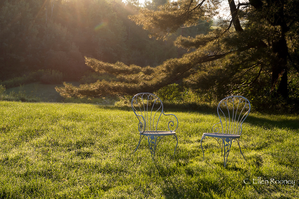 Two curved metal  garden chairs on the lawn of a garden at sunrise in Westerlo, New York State, U.S.A.