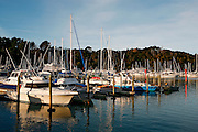 pleasure craft boats in dock at tutukaka marina, northland, new zealand