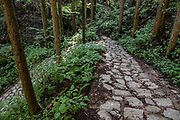 "Stone pathway through forest on preserved fuedal Nakasendo route from Tsumago to Magome, Japan. Tsumago preserves an Edo Period post town on the fuedal Nakasendo route between Kyoto and Edo (present-day Tokyo). To enforce historic ambiance, phone lines and power cables are concealed, and cars are prohibited during daytime. Visitors are encouraged to stay in minshuku and ryokan lodging, and to hike a portion of the trail preserved between Tsumago and Magome villages, via pleasant rural and forest scenery. The Nakasendo, or ""Central Mountain Route"", was one of Five Routes (Gokaido, begun in 1601) which helped the Tokugawa shogunate to stabilize and rule Japan (1600-1868). Tsumago is in Nagano Prefecture, Japan."