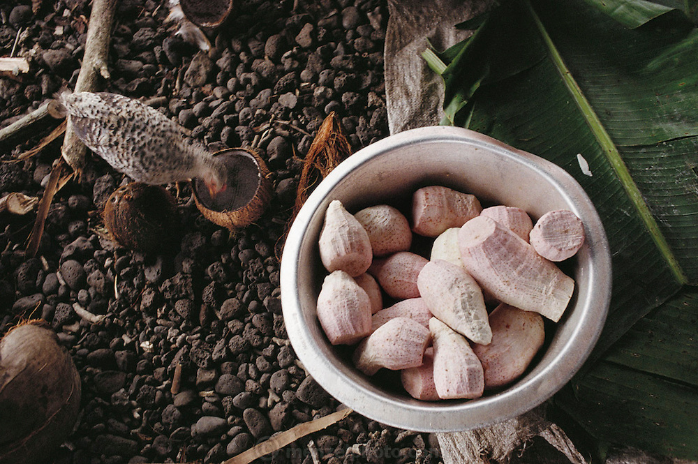Taro root, peeled and ready for cooking in the Lagavale family's kitchen house in Western Samoa. A young chicken is pecking around, looking for food scraps. The Lagavale family lives in a 720-square-foot tin-roofed open-air house with a detached cookhouse in Poutasi Village, Western Samoa. The Lagavales have pigs, chickens, a few calves, fruit trees and a vegetable garden. Material World Project.