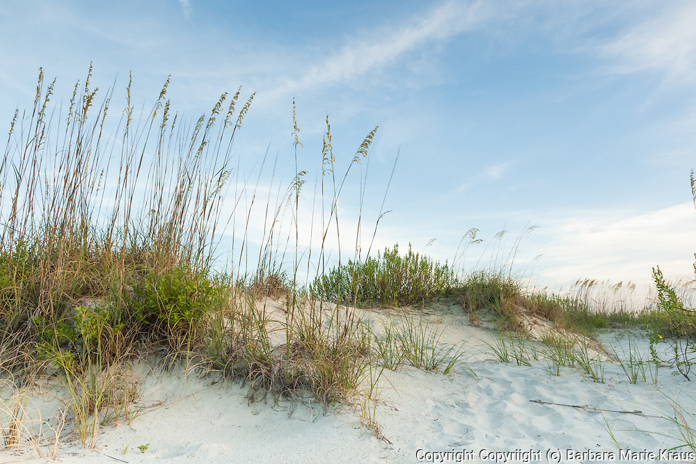 Coastal sand dunes are dynamic but fragile buffer zones of sand and vegetation that form where the following three characteristics can be found:<br /> large quantities of sand<br /> persistent wind capable of moving the sand<br /> suitable locations for sand to accumulate<br /> The process of dune formation begins with a steady on-shore wind capable of moving sand. The wind moves the sand into piles. Eventually the sand pile becomes so steep that the leeward side of the sand pile collapses under its own weight and spills down at an angle that serves to stabilize the dune. Over time, the dune migrates in the direction of the wind, as the wind moves sand up the dune's slope and over the edge.<br /> Sand dunes often form around obstructions such as rocks, drift wood, decaying plant matter, and detritus that is washed up during high-tide. This decaying plant matter forms a perfect substrate for plants to set root. Plants the first set root in sand dunes are referred to as pioneer plants and are often grasses that have special adaptations for the harsh environment of the dune (high salt tolerance, waxy leaves that retain water, rolled leaves to reduce surface area and exposure to evaporation). These pioneer plants stabilize the dune. Their roots bind the sand and their leaves decrease wind speed and reduce erosion.<br /> After pioneer plants stabilize the dune, it becomes more habitable for other plants to move in. A progression of vegetation types set hold onto the dune, each changing the substrate's characteristics and structure, gradually making the dune suitable for the next vegetation type.<br /> Sand dunes, though dynamic, are fragile habitats. The mat of vegetation covering a dune is vital to reducing dune erosion and if this vegetation is disturbed or uprooted, the dune is destroyed.