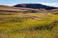 The greens, reds and brown colors  of the autumn season on the prairie grasslands of Wind Cave National Park.  South Dakota.
