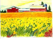Daffodil Farm, Puyallup, WA. Pencil sketch. ©JoAnn Hawkins.