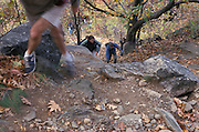 hikers going up a trail