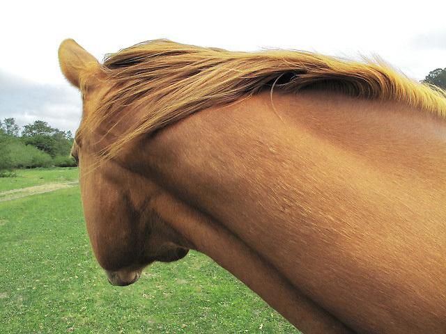 One of Kimberly's horses at the farm in sebastopol