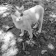 The Blind Cat, by May. <br /> <br /> May is from Myanmar, but resides at Daughters Rising in Thailand, where she found refuge after she was arrested for circulating without identification. May is learning English, but only knows a little. She enjoys photography and playing volleyball; her favorite color is yellow. Through photography, May found a common language to share her thoughts and expressions. Her love for outdoor and nature reflects in her photographs.