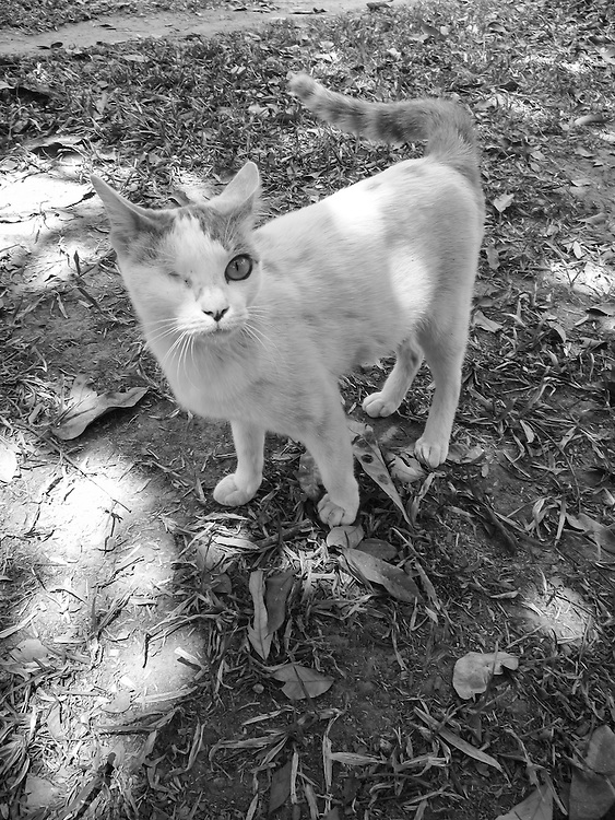The Blind Cat, by May. <br />