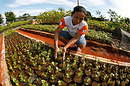 ISA is a Brazilian NGO which encourage  farmers to grow trees