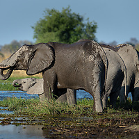 Elephants - In Africa's Most Protected Place