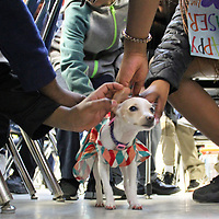 Students give Sweetie plenty of love in between lessons in math.