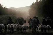 Sheep herders descend from the paramo towards their villages at dusk, Cotopaxi Province.