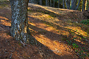 Forest on top of Mt. Maxwell <br />Saltspring Island<br />British Columbia<br />Canada