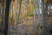 Watchung Reservation, Mountainside, New Jersey (NJ), USA.