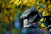THIS PHOTO IS AVAILABLE FOR WEB DOWNLOAD ONLY. PLEASE CONTACT US FOR A LARGER PHOTO. Idaho. Bird house hangs from trees in fall folliage at Allison Ranch.