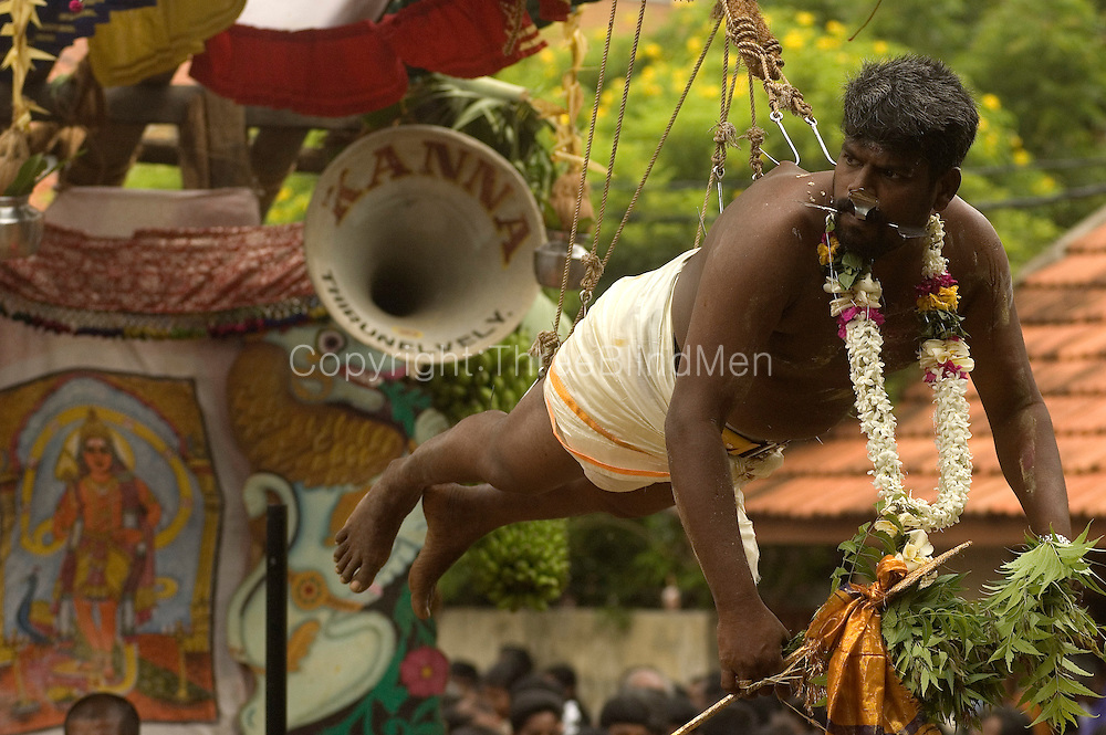 Penitent hanging from hooks at the annual Nallur Kandaswamy festival.