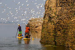 On various occasions the Ganges river has the feel of a bird sanctuary.<br /> <br /> Somewhere between Allahabad and Varanasi.