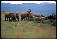 04: GAME PARKS ELEPHANTS ETC