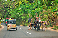 Alberto Carrera, Road Scene, Sri Lanka, Asia
