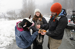 "Rachel Wheat, a graduate student at the University of California Santa Cruz (center) holds bald eagle (Haliaeetus leucocephalus) ""4P"" as it is being prepared to be released back into the wild. Yiwei Wang, graduate student, University of California Santa Cruz (left), and Steve Lewis, Raptor Management Coordinator, U.S. Fish & Wildlife Service (right), remove the leather booties that protected the researchers from the bald eagle's powerful talons during the process of taking measurements and attaching the GPS satellite transmitter. Wheat is conducting a bald eagle migration study of eagles that visit the Chilkat River for her doctoral dissertation. She hopes to learn how closely eagles track salmon availability across time and space. The bald eagles are being tracked using solar-powered GPS satellite transmitters (also known as a PTT - platform transmitter terminal) that attach to the backs of the eagles using a lightweight harness. The latest location of this eagle can be found here: http://www.ecologyalaska.com/eagle-tracker/4p/ . During late fall, bald eagles congregate along the Chilkat River to feed on salmon. This gathering of bald eagles in the Alaska Chilkat Bald Eagle Preserve is believed to be one of the largest gatherings of bald eagles in the world."