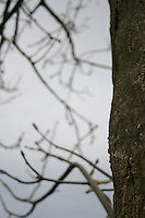 Close up of tree bark in the winter at public park in Dublin Ireland
