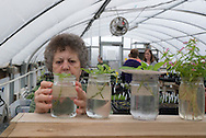 Master Gardener Program Volunteers working in the greenhouse in Cleveland County in Norman Oklahoma. Volunteers receive training in return donate many hours of time back to the program and the community.