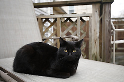Miel in the back yard at Payne Street, Tuesday, March 28, 2017 at House of Payne in Louisville.