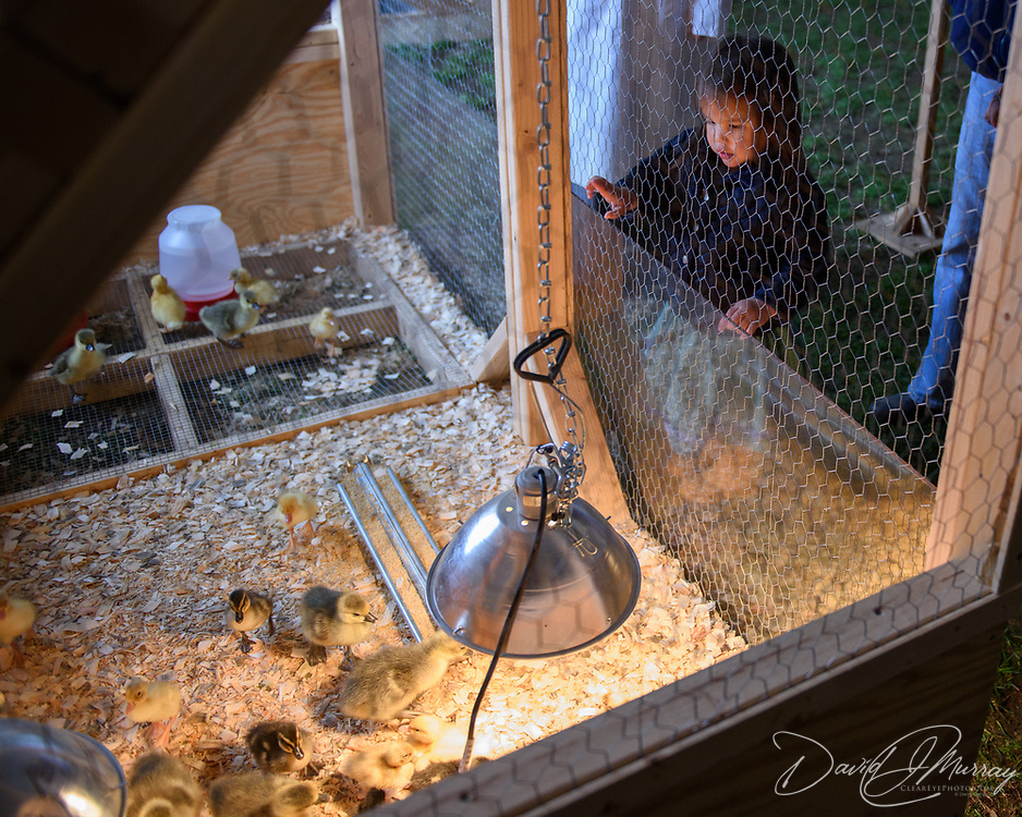 Taken at the opening of the Baby Animals at Strawbery Banke! exhibit on April 22, 2017