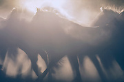 Chariots of Zeus, etherial photography of wild mustangs, Tracie Spence photographs at Return to Freedom, limited edition fine art photography, smoke and dust rising from earth in shadows of running mustangs,