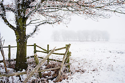 Snow, frost and mist, winter at Bradgate Country Park, Leicestershire, England, UK.