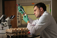 Prestage Dept. of Poultry Science student samples an eggs in a Scott Hall teaching lab.