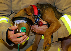 UK - Pet-friendly Oxygen Masks For Fire And Rescue Services - 06 Nov 2016