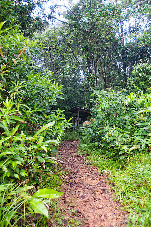 The Botanical trail of the Regional Nature Reserve Trésor, in French Guiana.
