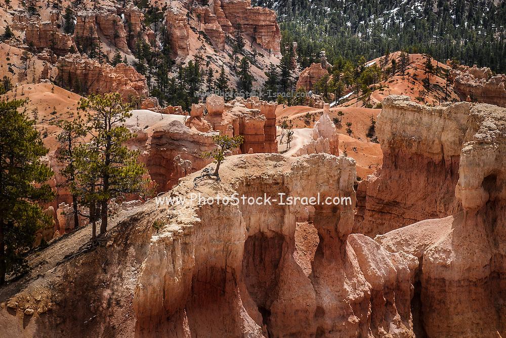 Bryce Canyon National Park, Utah USA