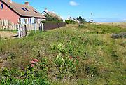 Houses behind vegetated beach Shingle Street, Suffolk, England, UK