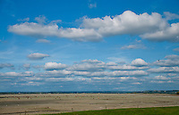 Sheep grazing on salt flats under a blue sky with puffy clouds near Mont St. Michel.